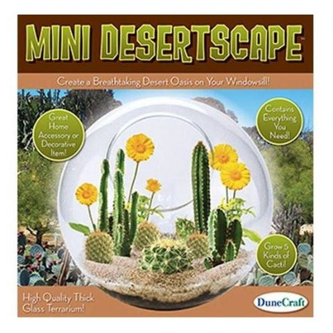 Mini Desertscape Glass Terrarium - Grow Your Own Cactus DuneCraft